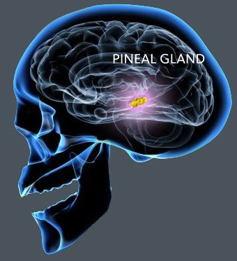 A Fluoride-Free Pineal Gland is More Important than Ever | in5d.com | Esoteric, Spiritual and Metaphysical Database