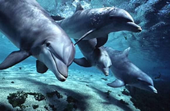 Maori Dolphin Folklore