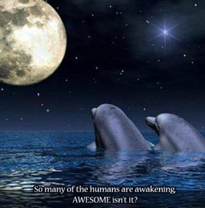 Everything You Wanted to Know About Dolphins   in5d.com   Esoteric, Spiritual and Metaphysical Database