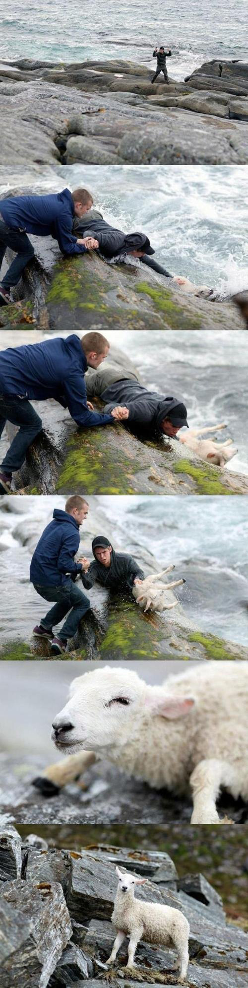 This picture of two Norwegian guys rescuing a sheep from the ocean.