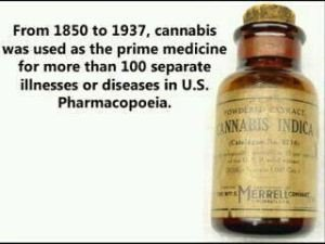 MEDICINES SHOULD BE MADE FROM HEMP
