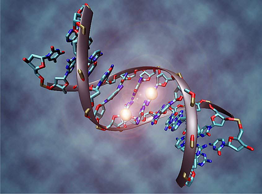 Is the Human Race Evolving to Have Three Strands of DNA?