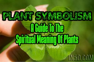 Plant Symbolism – A Guide To The Spiritual Meaning Of Plants – H through P