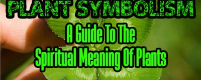 Plant Symbolism - A Guide To The Spiritual Meaning Of Plants