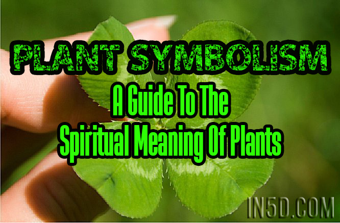 Plant Symbolism A Guide To The Spiritual Meaning Of Plants In5d
