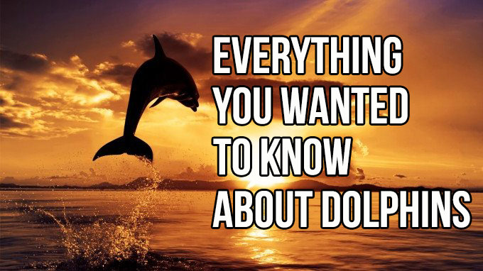 Everything You Wanted To Know About Dolphins