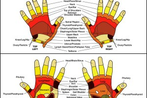 Reflexology – Methods and Tutorials