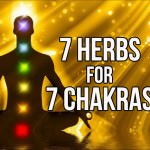 7 Herbs For 7 Chakras