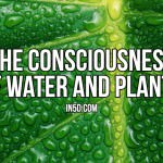 The Consciousness Of Water And Plants