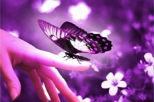 The Esoteric Meaning Of The Butterfly