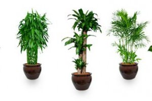 Top 10 Air-Purifying Plants To Improve The Feng Shui Of Your Home Or Office