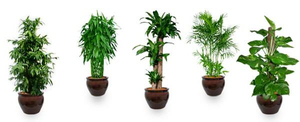 Top 10 Air-Purifying Plants To Improve The Feng Shui Of Your Home Or Office in5d