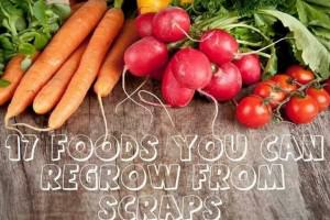 17 Plants You Can Regrow From Kitchen Scraps