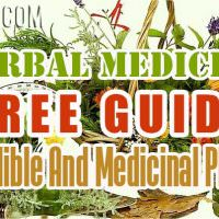 FREE GUIDE To Edible And Medicinal Plants – Herbal Medicine