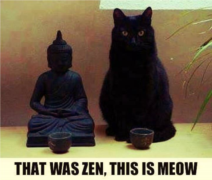 That was Zen, this is Meow in5d