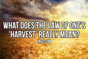 What Does The Law Of One's 'Harvest' Really Mean?