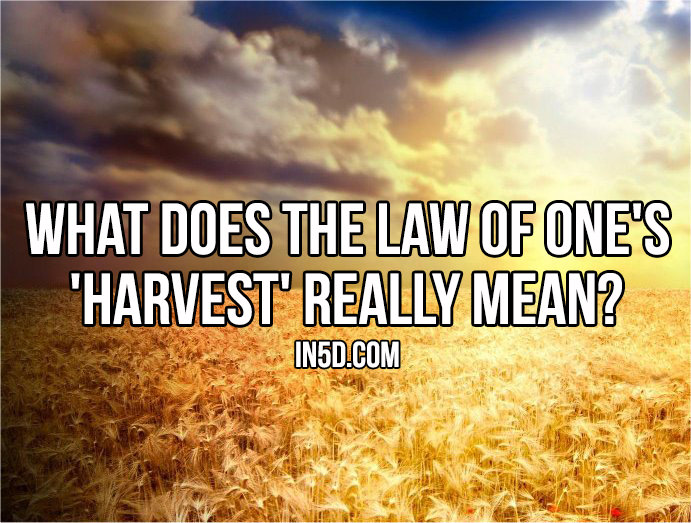 What Does The Law Of One's 'Harvest' Really Mean? in5d in 5d