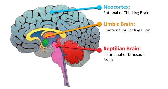 Reptilian Brain in5d in 5d in5d.com www.in5d.com http://in5d.com/