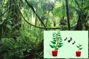 Amazing Singing Plants Phenomenon