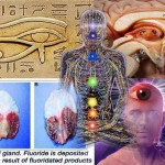 Proof That The Pineal Gland Is Literally A 3rd Eye