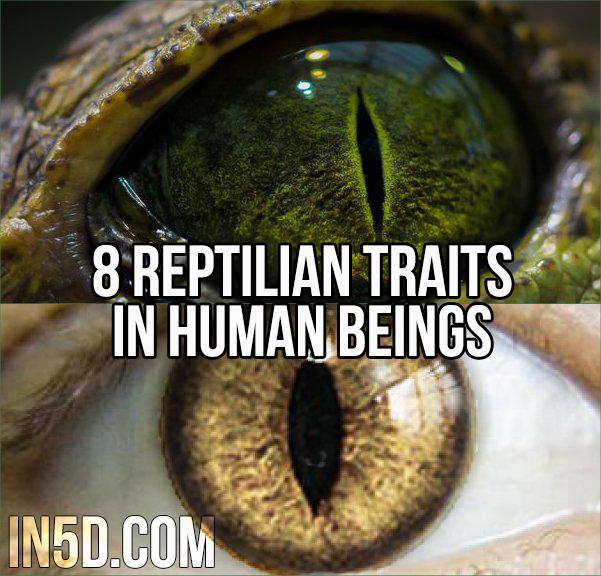 8 Reptilian Traits In Human Beings in5d in 5d in5d.com www.in5d.com http://in5d.com/