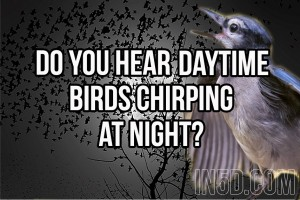 Do You Hear Daytime Birds Chirping At Night?