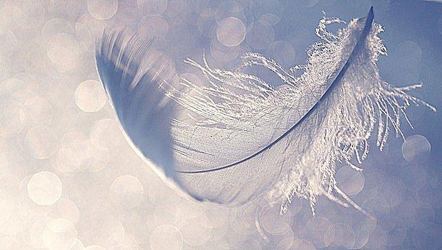 Image result for spirit guide