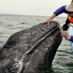 Ensnared Whale Gratefully Gives Rescuers A Lesson In Empathy