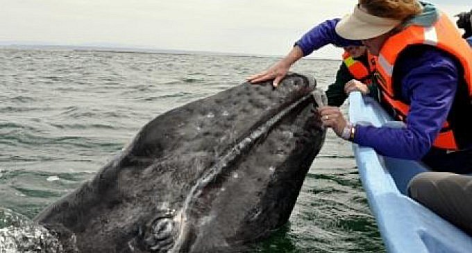 Ensnared Whale Gratefully Gives Rescuers A Lesson In Empathy in5d in 5d in5d.com www.in5d.com //in5d.com/%20body%20mind%20soul%20spirit%20BodyMindSoulSpirit.com%20http://bodymindsoulspirit.com/