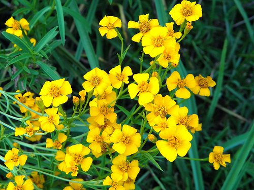 7 Sensational Herbs for Dream Recollection & Spirit Communication