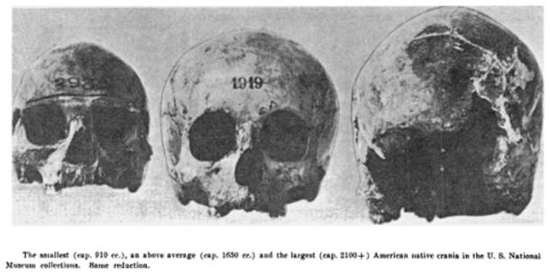 Figure 3: Various sized skulls found at Potomac Creek, Stafford County, Virginia, 1937.