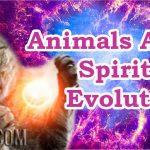 Animals And Spiritual Evolution