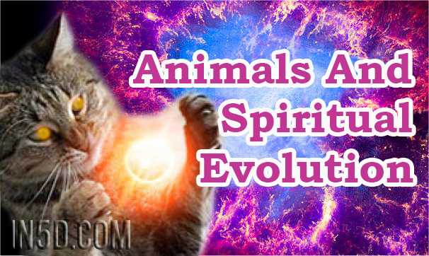 Animals And Spiritual Evolution