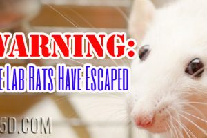 Warning:  The Lab Rats Have Escaped