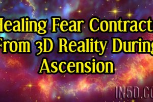 Healing Fear Contracts From 3D Reality During Ascension