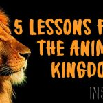 5 Lessons From The Animal Kingdom