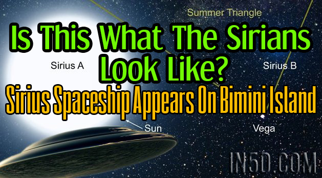 Is This What The Sirians Look Like? Sirius Spaceship Appears On Bimini Island