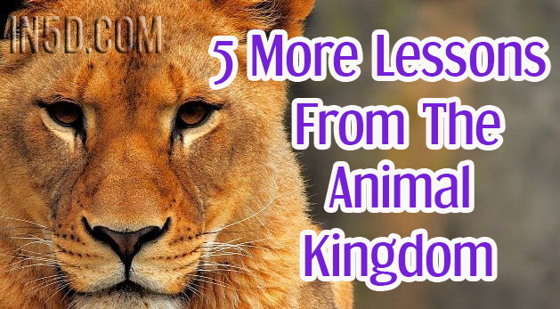5 More Lessons From The Animal Kingdom