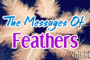 The Messages Of Feathers