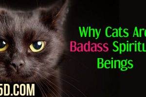 Why Cats Are Badass Spiritual Beings
