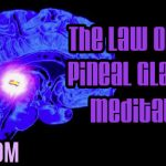 The Law of One, Pineal Glands & Meditation: Awakening Collective Consciousness