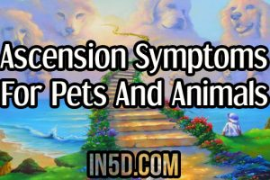 Ascension Symptoms For Pets And Animals