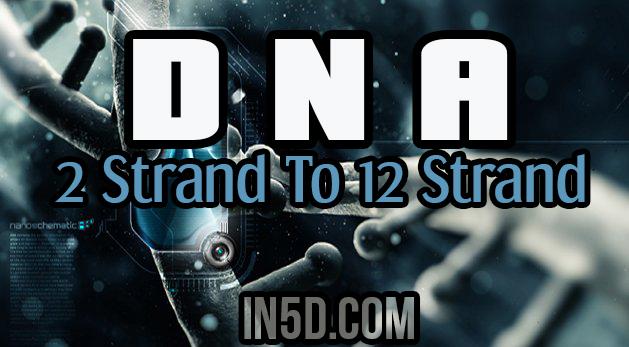 DNA: 2 Strand To 12 Strand. Where Do You Stand?