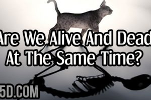 Are We Alive And Dead At The Same Time?