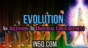 Evolution: An Ascension To Universal Consciousness