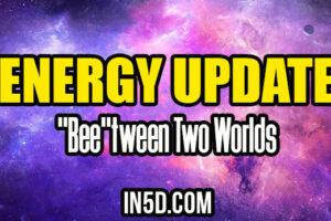 """Energy Update – """"Bee""""tween Two Worlds"""