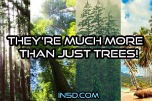 They're MUCH MORE Than Just Trees!