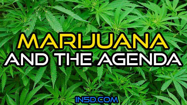 Marijuana And The Agenda