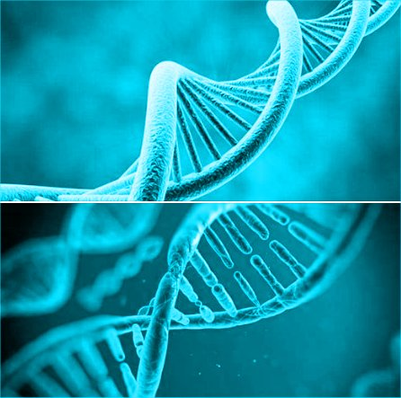 Our DNA is being activated meaning, those two biological strands of DNA (in 1st photo) are starting to talk to those 10 strands of DNA that spiral and intertwine up thru them.